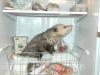 100427021951_opossum-400