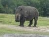 100427105720_rhino-400